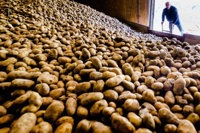 Резултат слика за krompir